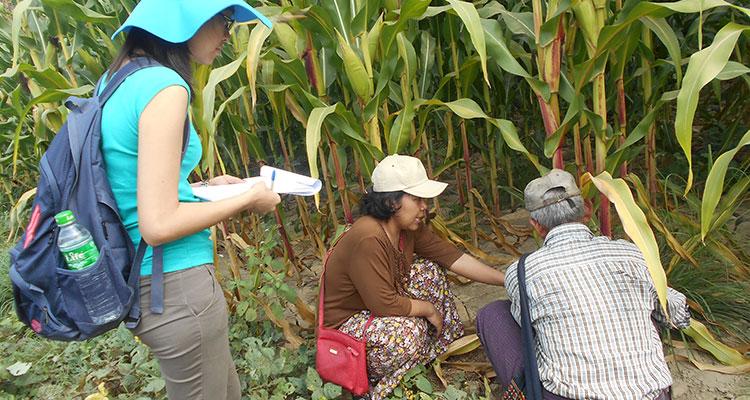 wb-corn-study-7
